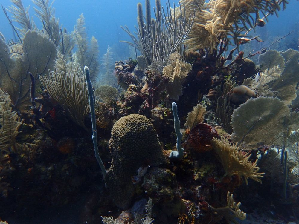 Your donation could help protect the Maya Mountain Marine Corridor in Belize