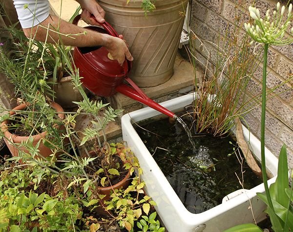 You don't need a lot of space to create a pond for wildlife