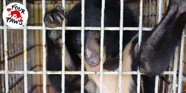 Please help me, says Cam the bear