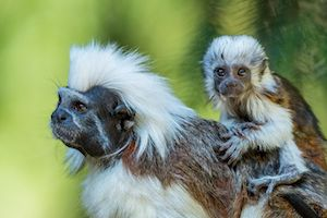 Help the Rainforest Trust save 110 vital acres of tropical rainforest in Colombia