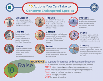 10 Actions you can take to conserve Endangered Species