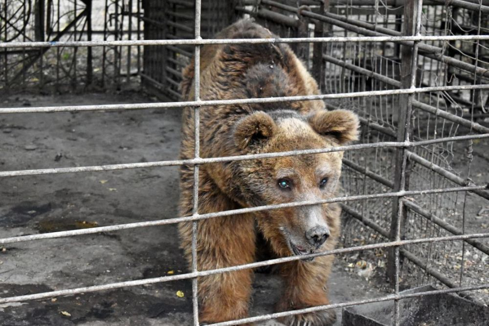 International Animal Rescue needs our help to rescue Nelson the bear