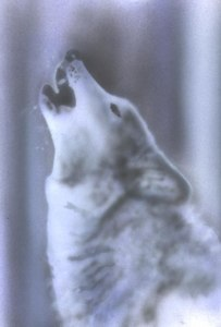 Howlin' Wolf Stencil