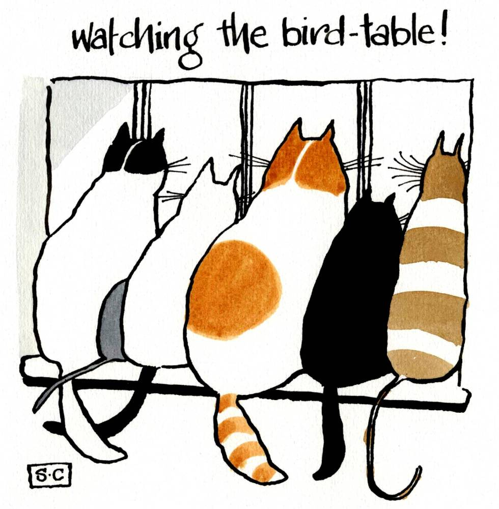 Watching The Bird Table
