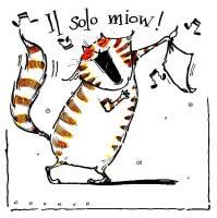 Solo Miow