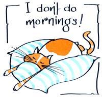 Cat Mornings