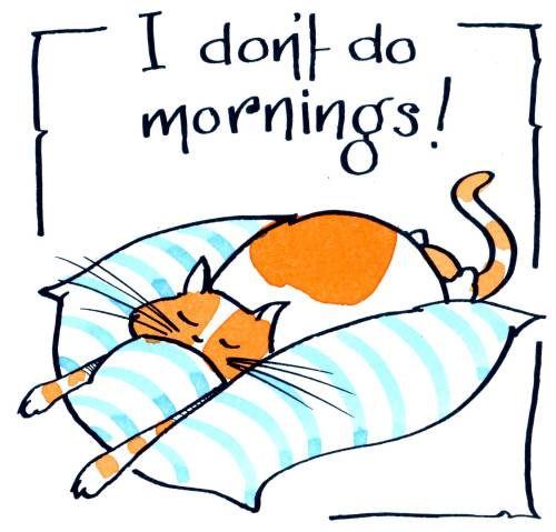 Cat Mornings