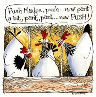 Helpful Hens - Madge