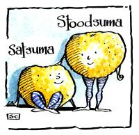 Satsumas