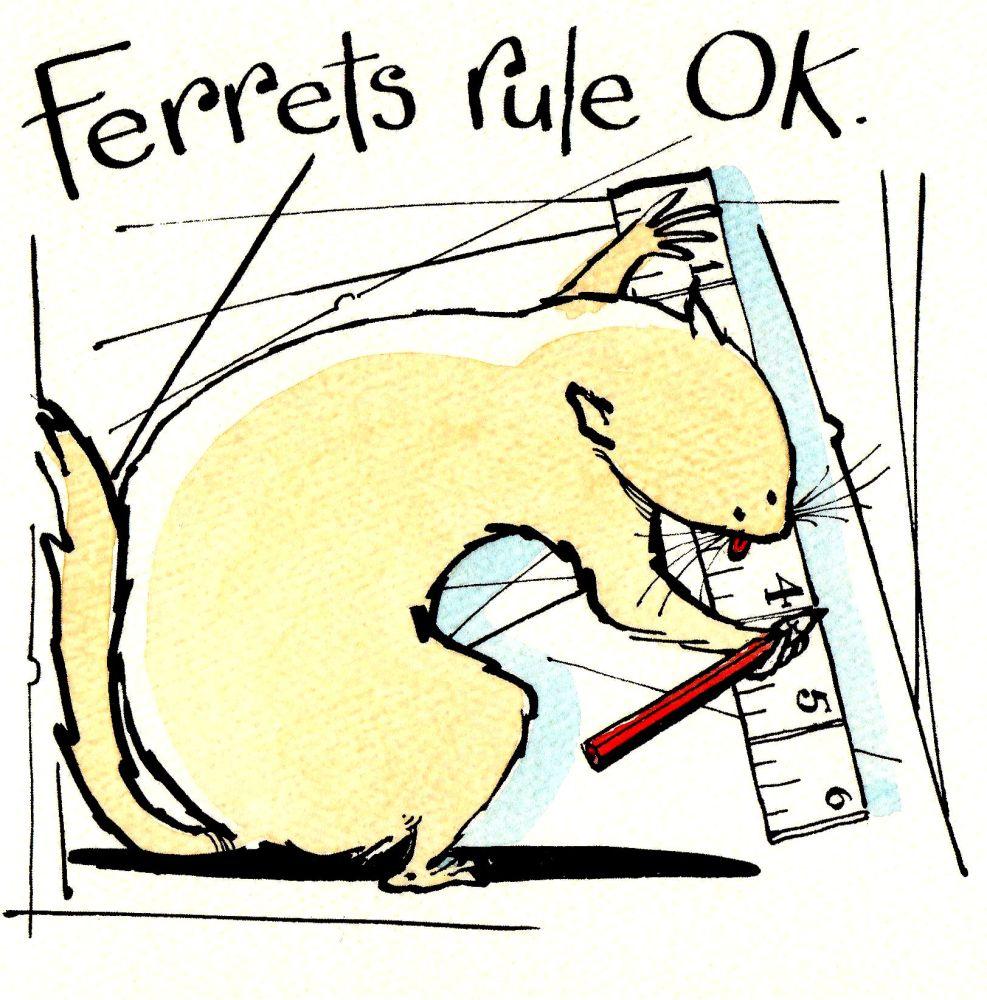 Ferrets Rule Ok