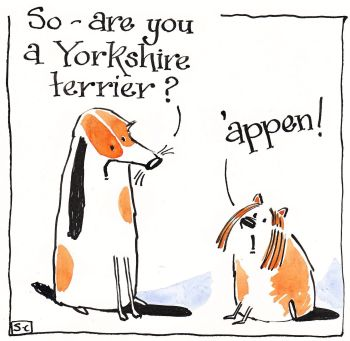 Are You A Yorkshire Terrier?