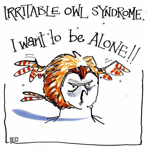 AAA  Irritable Owl