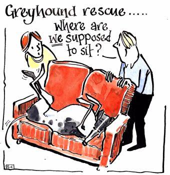 Considerations When Adopting A Greyhound