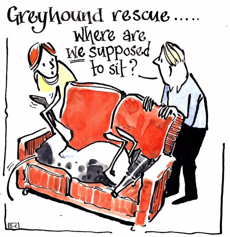 A Greyhound Rescue