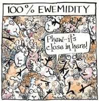 Sheep - Ewemidity