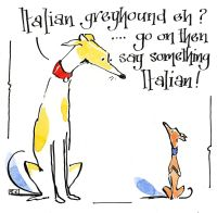 Greyhound Meets Italian Greyhound