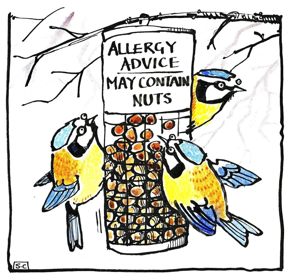 Greeting card shows cartoon birds  on bird feeder. Caption: Allergy Advice
