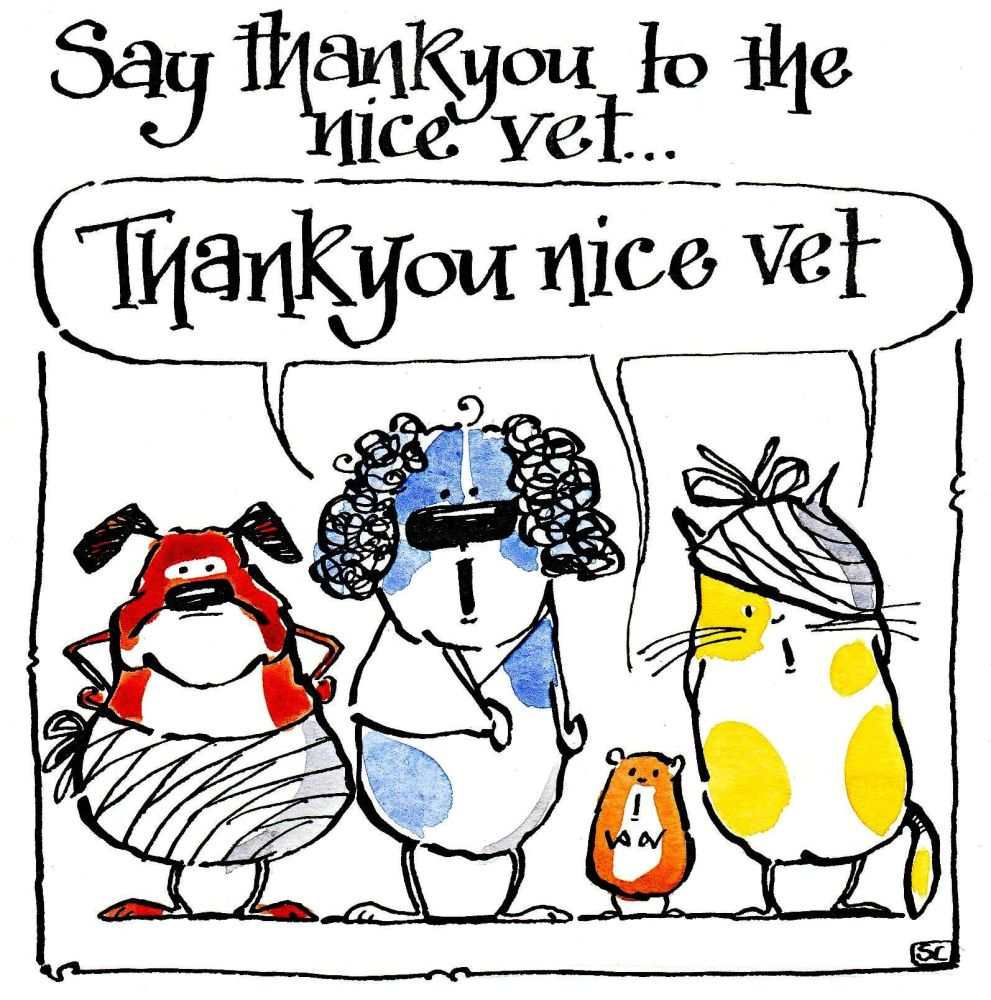 Thank You Nice Vet