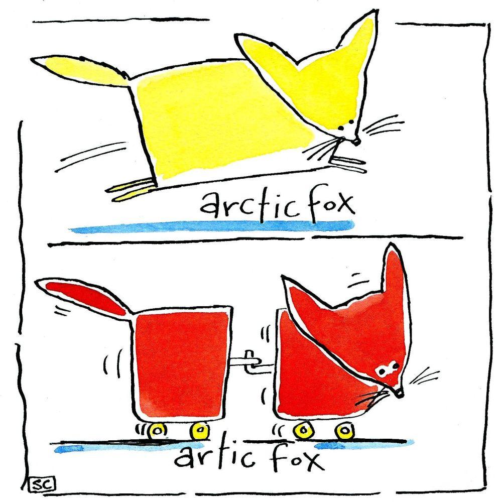 Artic/Arctic Fox