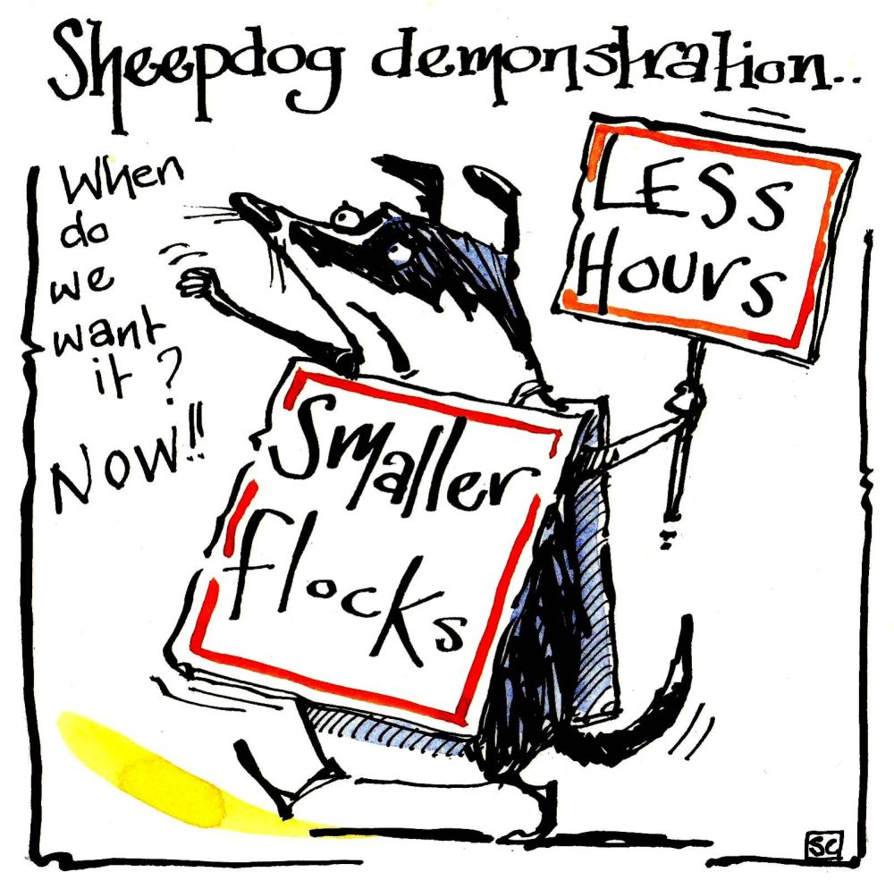 Greeting cards cartoon Sheepdog  with placard caption Sheepdog Demonstratio