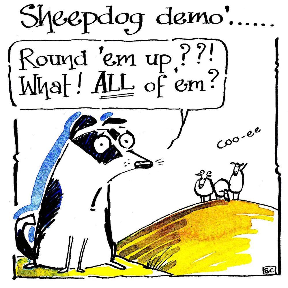 Greeting card with cartoon sheepdog and 3 sheep. Caption Sheepdog Demo Roun