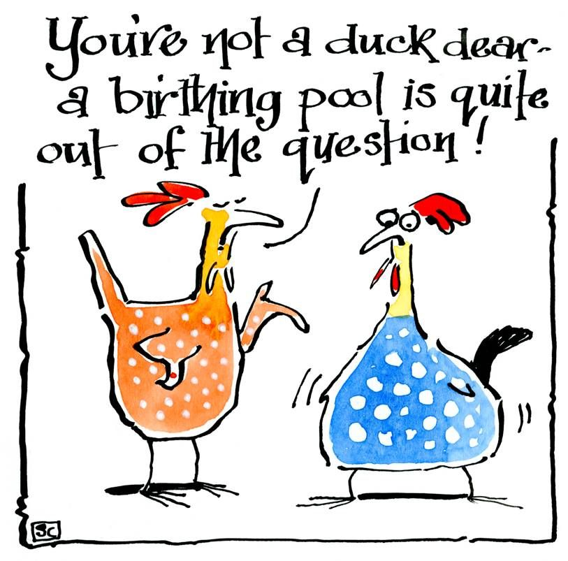 Pregnancy card with 2hens. With caption: You're not a duck dear a birthing