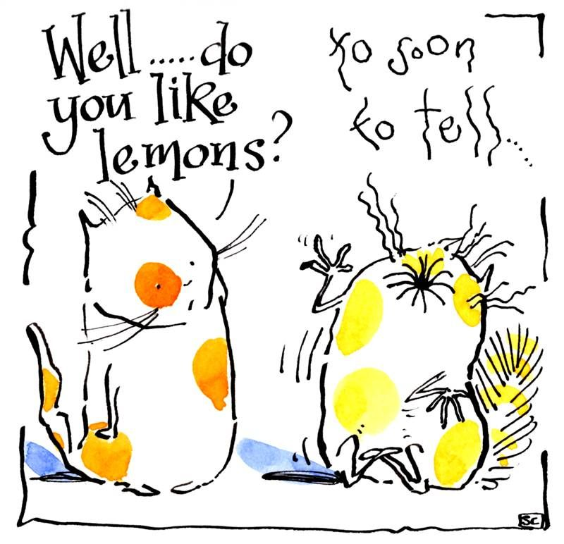 Funny cat card with two cartoon cats. Caption reads Do You Like Lemons? Too