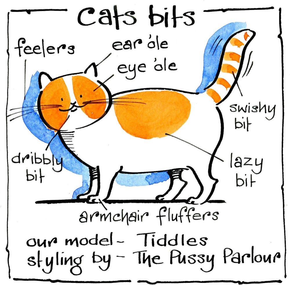 Funny cat card for all occasions . Cartoon cat with it's anatomy labelled e