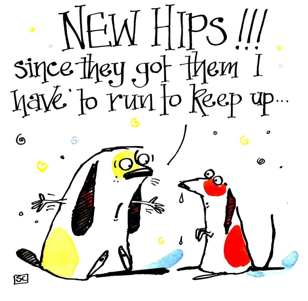 New Hips  - Dog Get Well Card 2 cartoon dog with caption New Hips Since The