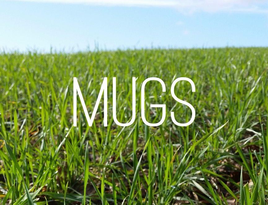 <!-- 006 -->Mugs