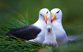 animal family 1