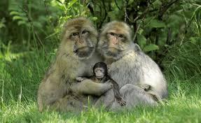 animal family 2