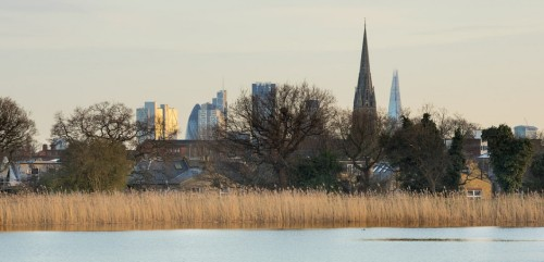 view from woodberry wetlands