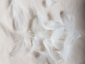 White Feathers   (approx .25 per pack)