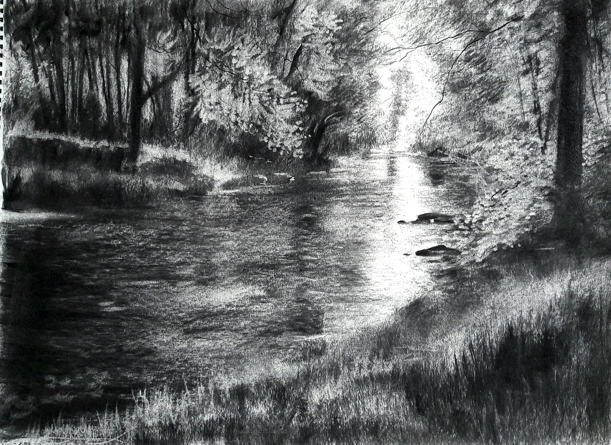 Hembury Woods #4 - Charcoal on cartridge paper (420 x 594 mm)