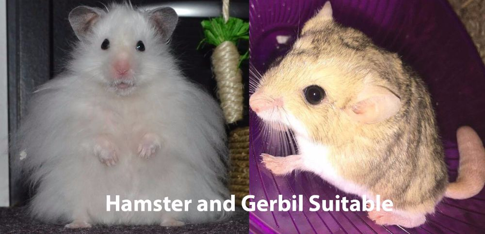 Hamster and gerbil Suitable