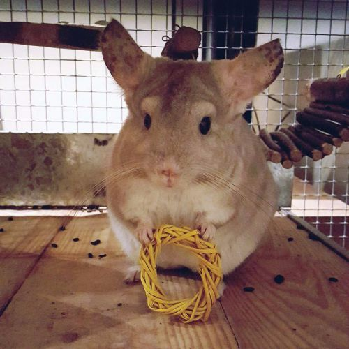 Chinchilla - Loose Wreath