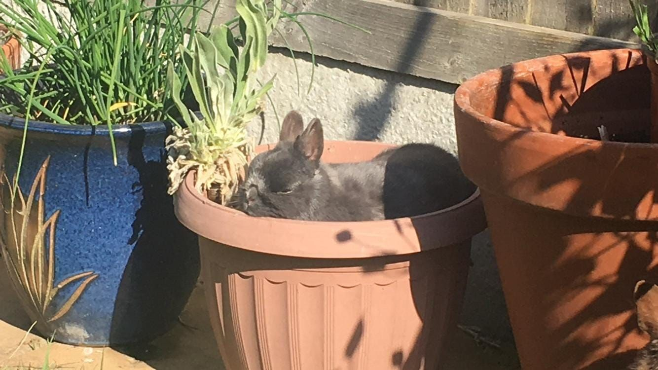 rabbit in plant pot