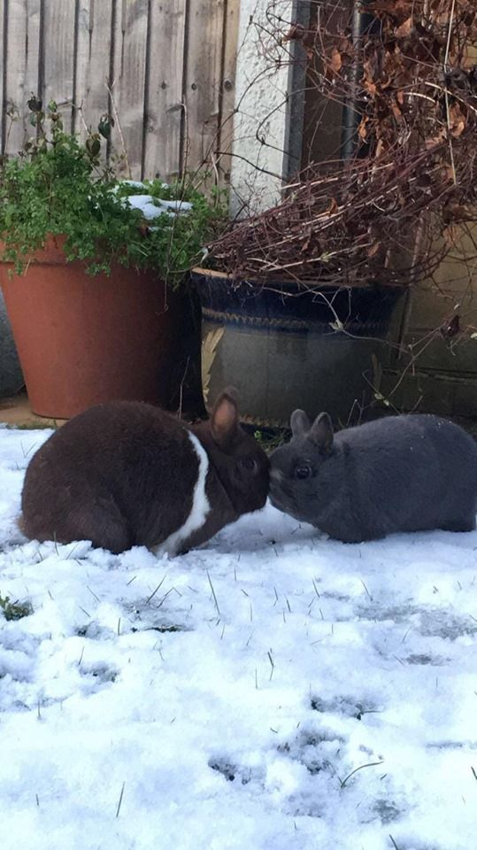 rabbits in snow