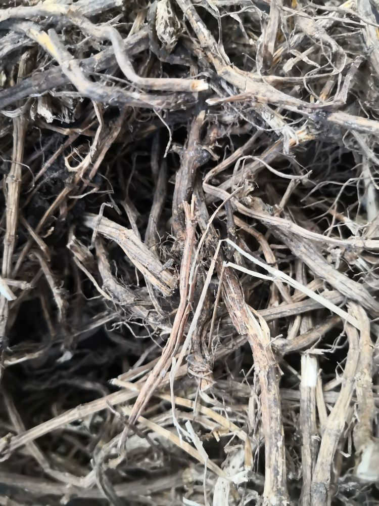 Nettle Root - Whole