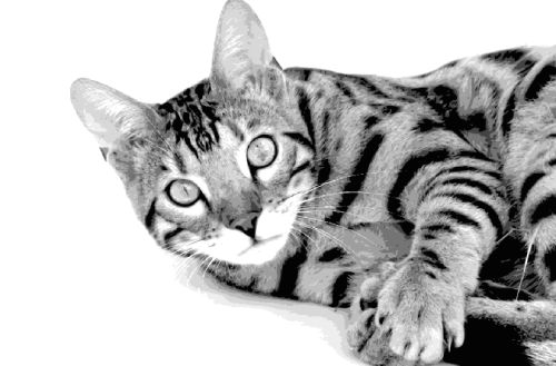 Layered Paper Cutting Template - Bengal Cat 1 - 8 layers