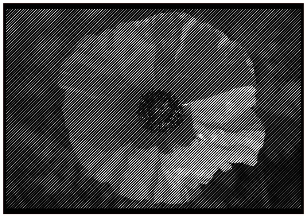 Poppy Half Tone Paper cut **Commercial Use**
