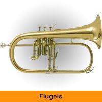 Flugels