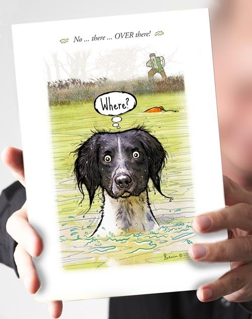 Where?...Liver & White Springer Card