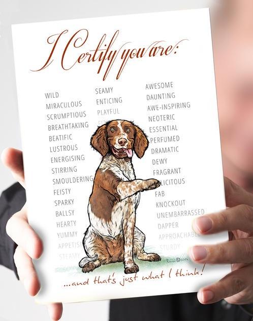 I Certify...Liver & White Springer Spaniel Card
