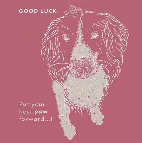 Good Luck Spaniel Card