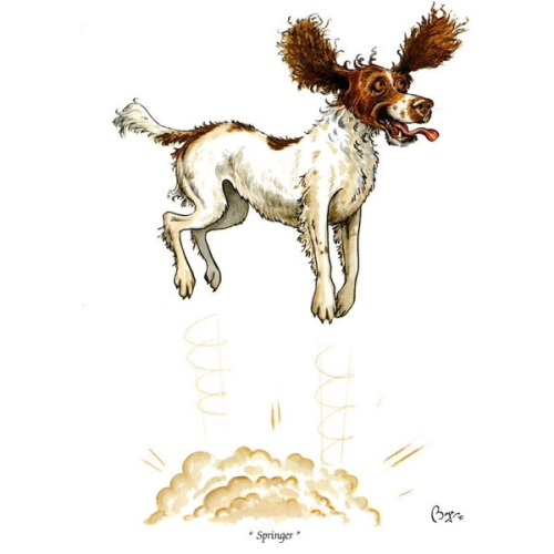 The Springer Spaniel Card