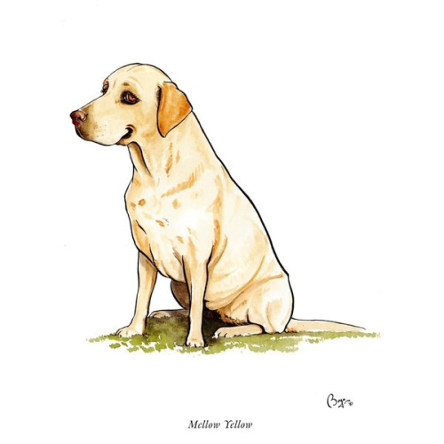 Mellow Yellow Labrador Card