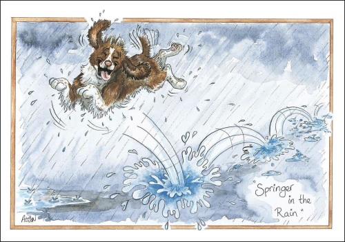 Springer in the Rain Card