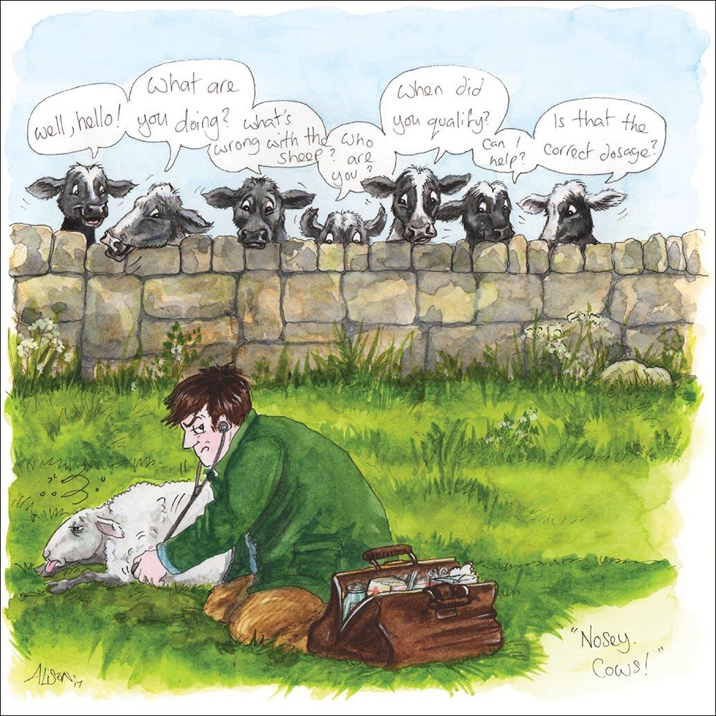 Nosey Cows Card